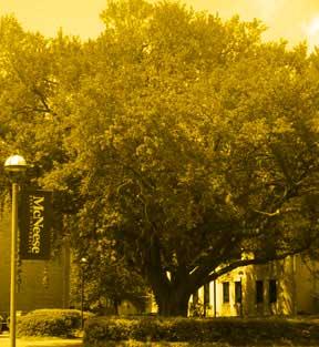 oak-tree-yellow